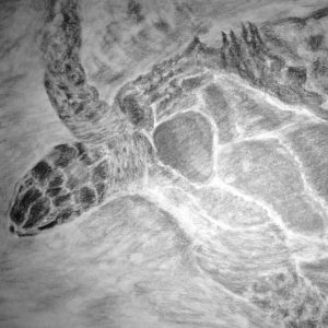 Turtle_Sanctuary_Isla_Mujeres_MX_Connie_J._Frisch-Cherniak_graphite